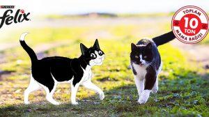 Hayvanlara destek için Felix'in #Sendepatile kampanyası başlıyor