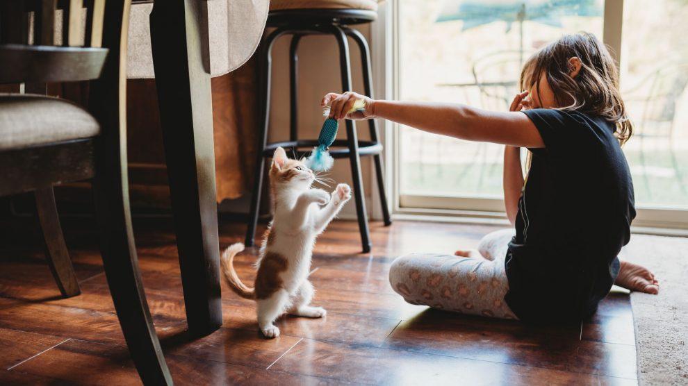 Kediler İçin Daha İyi Bir Dünya Sorumlu Hayvan Sahipliği İle Mümkün