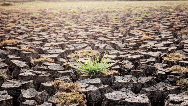 HSBC Türkiye 'İklim Eylemi' için çözüm üreten start-up'ları destekleyecek